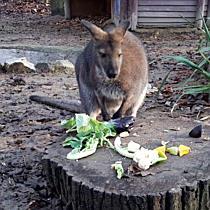 Állatok Karácsonya a Miskolci Állatkertben