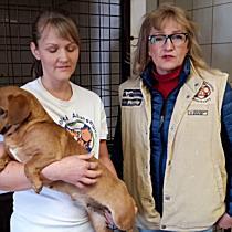 Szilveszterkor elkóborolt kutyák a MÁSA állatmenhelyén