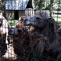 Zoo napközi a Miskolci Állatkertben