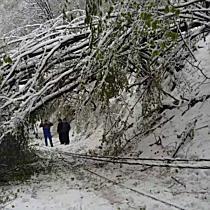 Kidőlt fák, leszakadt villanyvezetékek Ómassán I. - boon.hu