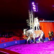 A Magyar Nemzeti Cirkusz Miskolcon