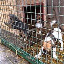 Nyílt nap az Állategészségügyi Telepen